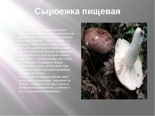 Сыроежка пищевая Шляпка — вначале полушаровидная, позднее вдавленная в центре...