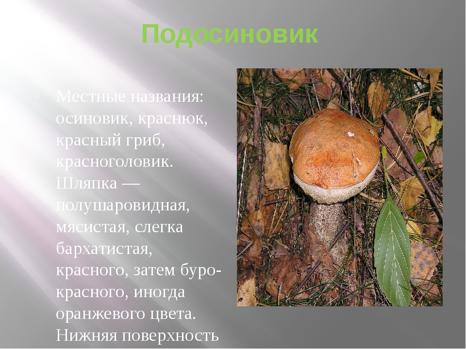 Подосиновик Местные названия: осиновик, краснюк, красный гриб, красноголовик....