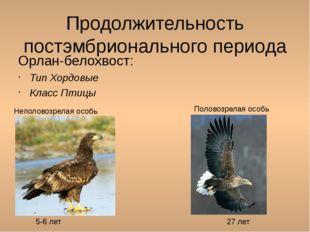 Продолжительность постэмбрионального периода Орлан-белохвост: Тип Хордовые Кл