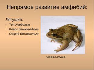 Непрямое развитие амфибий: Лягушка: Тип Хордовые Класс Земноводные Отряд Бесх