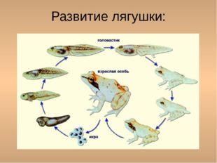 Развитие лягушки: