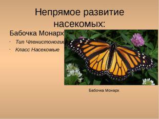 Непрямое развитие насекомых: Бабочка Монарх: Тип Членистоногие Класс Насекомы