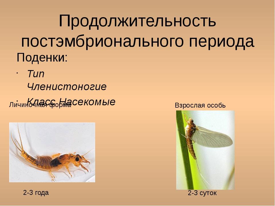 Продолжительность постэмбрионального периода Поденки: Тип Членистоногие Класс...
