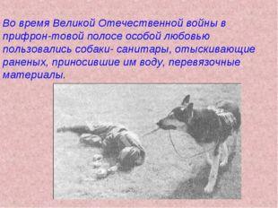 Во время Великой Отечественной войны в прифрон-товой полосе особой любовью по