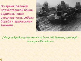 Во время Великой Отечественной войны родилась новая специальность собаки: бор