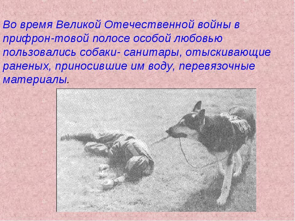 Во время Великой Отечественной войны в прифрон-товой полосе особой любовью по...