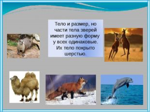 Тело и размер, но части тела зверей имеет разную форму у всех одинаковые. Их