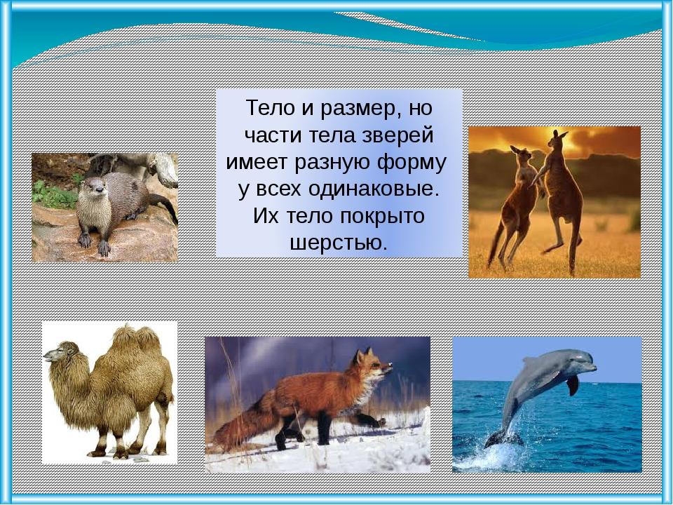 Тело и размер, но части тела зверей имеет разную форму у всех одинаковые. Их...