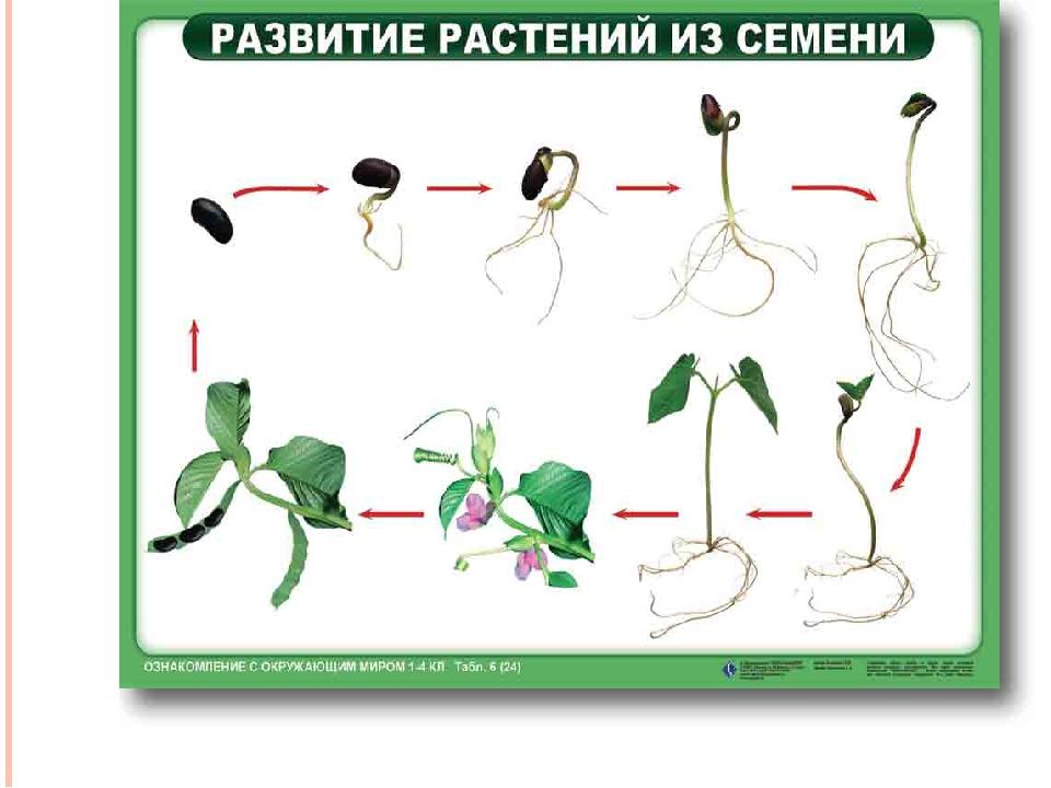 благодарным картинка как развивается растение из семени знаменитостей