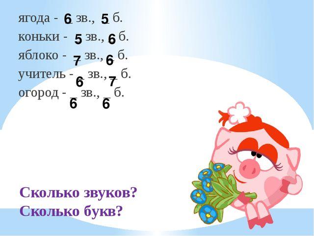 Сколько звуков? Сколько букв? ягода - _ зв., _ б. коньки - _ зв., _ б. яблоко...