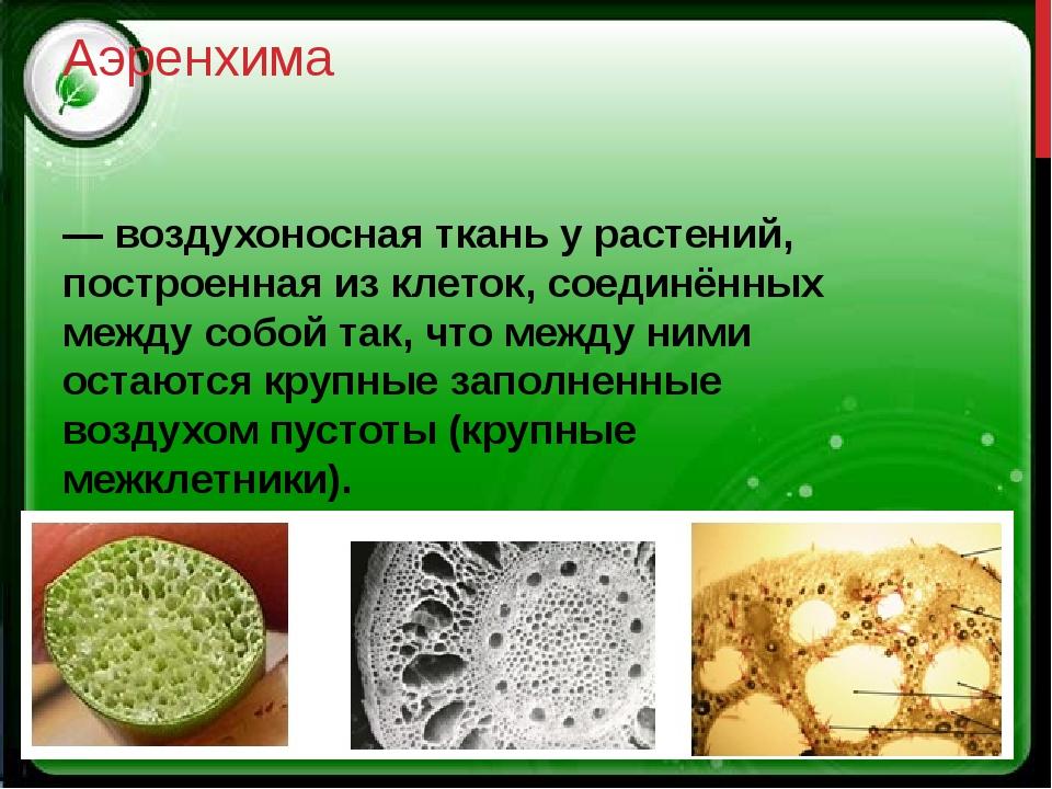 Аэренхима — воздухоносная ткань у растений, построенная из клеток, соединённы...