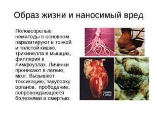 Образ жизни и наносимый вред Половозрелые нематоды в основном паразитируют в