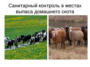 Санитарный контроль в местах выпаса домашнего скота