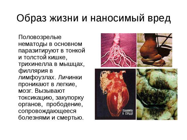 Образ жизни и наносимый вред Половозрелые нематоды в основном паразитируют в...