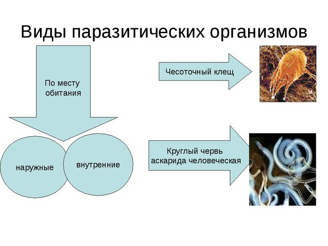 Виды паразитических организмов По месту обитания наружные внутренние Чесоточн...