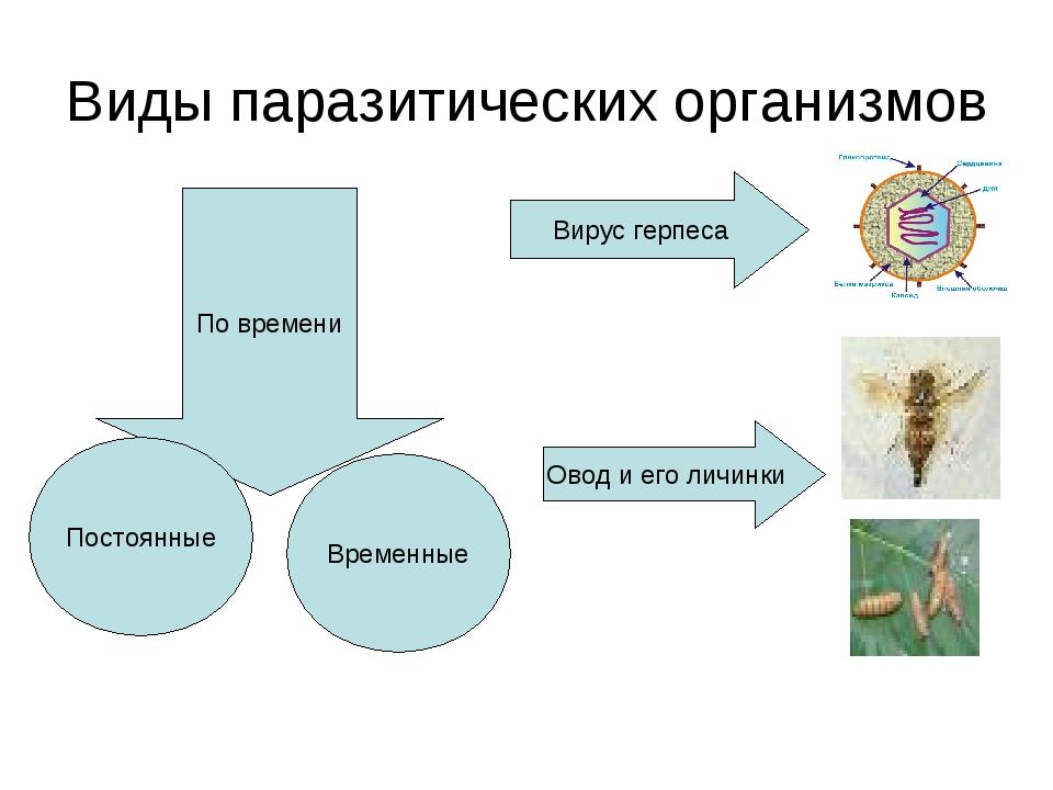 Виды паразитических организмов По времени Постоянные Временные Вирус герпеса...
