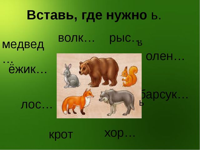 Вставь, где нужно ь. медвед… волк… рыс… ёжик… олен… барсук… лос… крот… хор…...