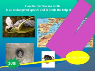 Caretta-Caretta sea turtle is an endangered species and it needs the help of