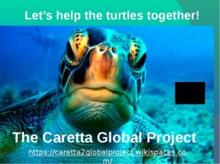 Let's help the turtles together! The Caretta Global Project https://caretta2g