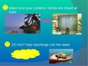 Make sure your curtains / blinds are drawn at night DO NOT help hatchlings in