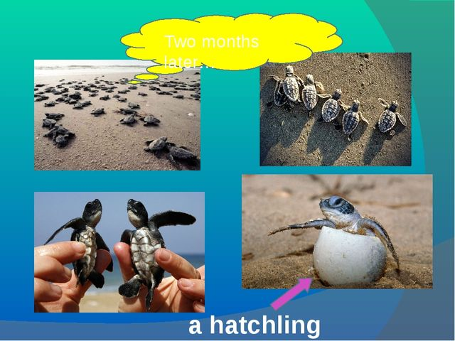 Two months later… a hatchling
