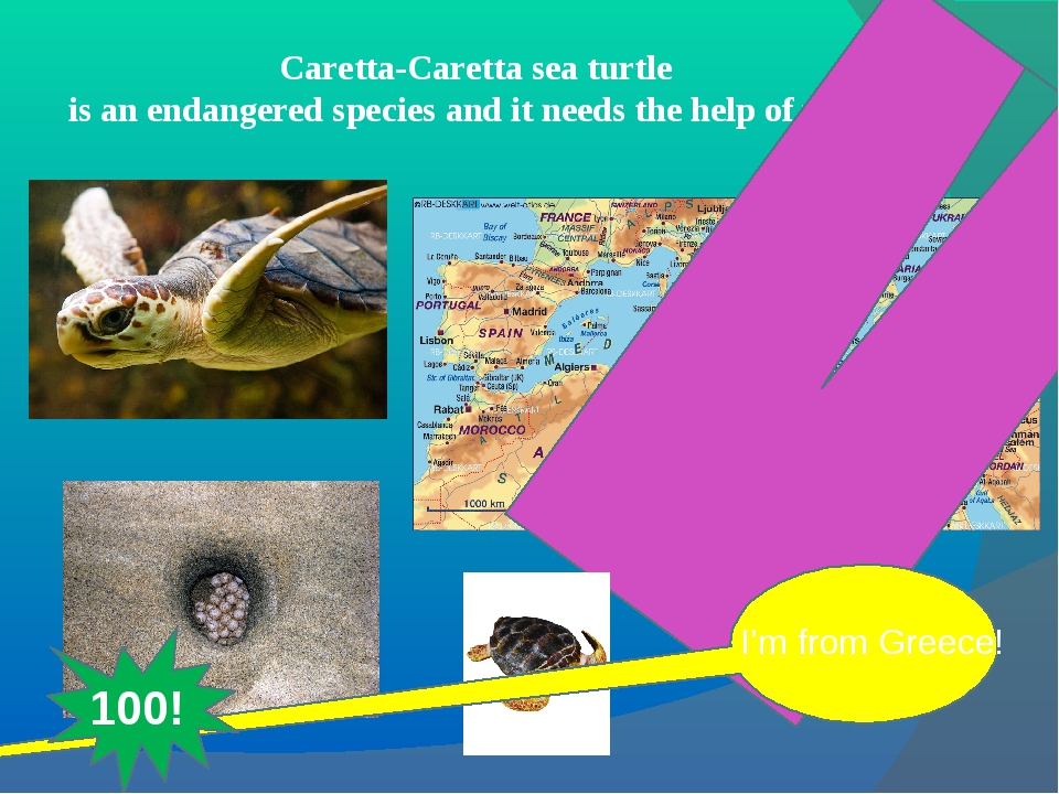 Caretta-Caretta sea turtle is an endangered species and it needs the help of...