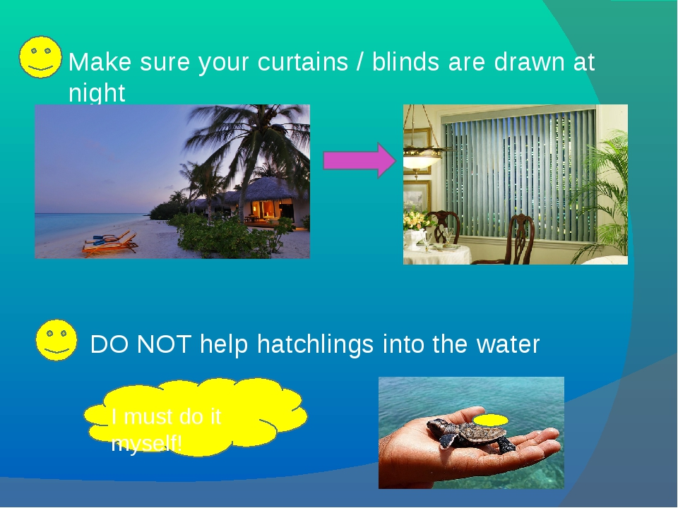 Make sure your curtains / blinds are drawn at night DO NOT help hatchlings in...