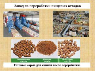 Завод по переработки пищевых отходов Готовые корма для свиней после переработки
