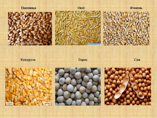 Пшеница Овёс Ячмень Кукуруза Горох Соя
