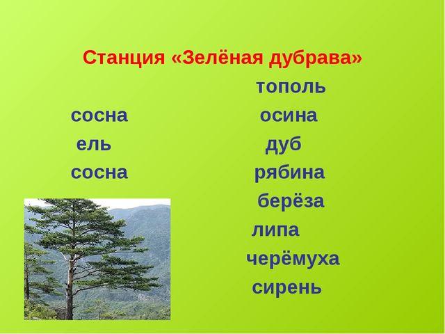 Станция «Зелёная дубрава» тополь сосна осина ель дуб сосна рябина берёза лип...