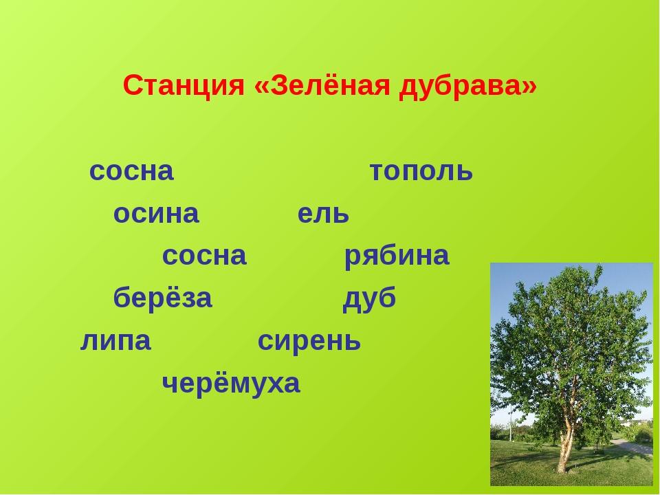 Станция «Зелёная дубрава» сосна тополь осина ель сосна рябина берёза дуб лип...