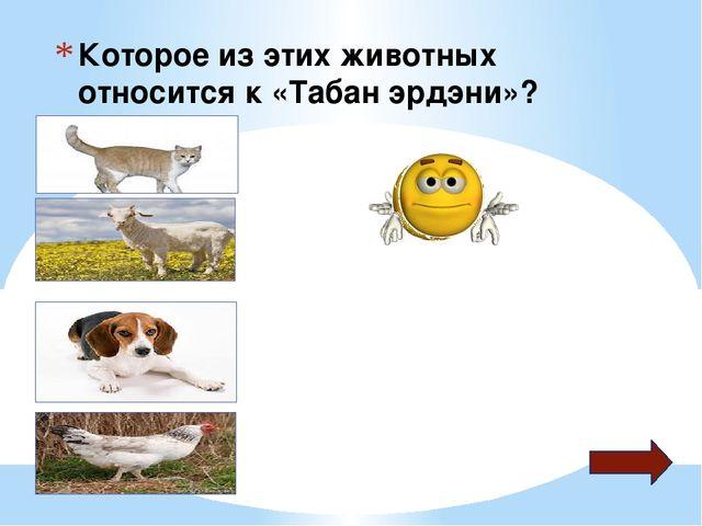 Которое из этих животных относится к «Табан эрдэни»?