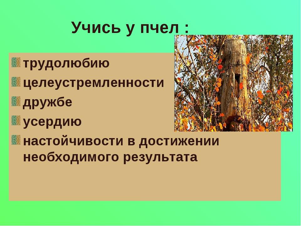 Учись у пчел : трудолюбию целеустремленности дружбе усердию настойчивости в д...
