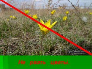 Не рвать цветы.