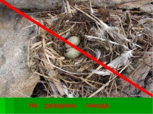 Не разорять гнезда.