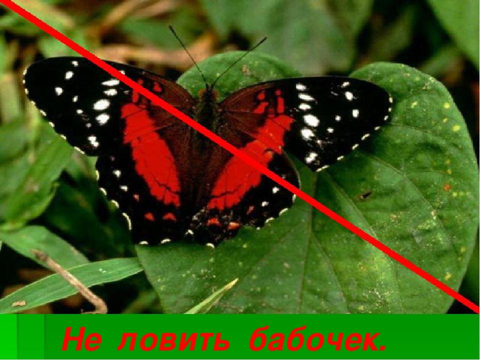 Не ловить бабочек.