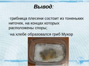 Вывод: грибница плесени состоит из тоненьких ниточек, на концах которых распо