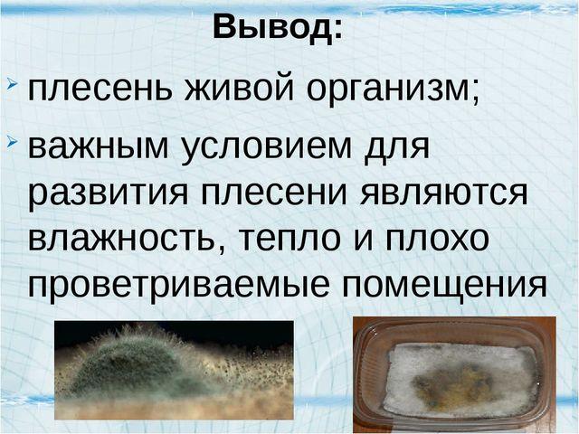 Вывод: плесень живой организм; важным условием для развития плесени являются...
