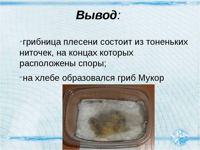 Вывод: грибница плесени состоит из тоненьких ниточек, на концах которых распо...