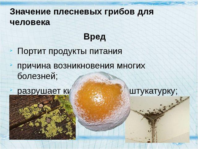 Значение плесневых грибов для человека Вред Портит продукты питания причина в...