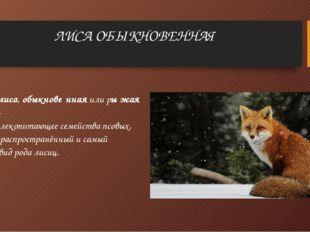ЛИСА ОБЫКНОВЕННАЯ Лисица,лиса,обыкнове́ннаяили ры́жая лиси́ца-хищноемлек