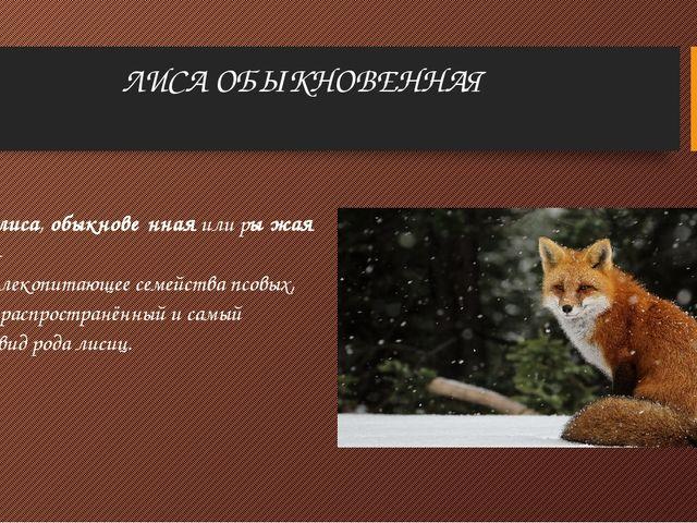 ЛИСА ОБЫКНОВЕННАЯ Лисица,лиса,обыкнове́ннаяили ры́жая лиси́ца-хищноемлек...