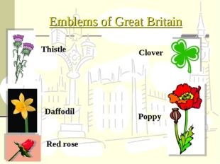 Emblems of Great Britain Poppy Red rose Daffodil Clover Thistle