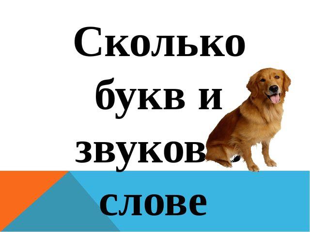 Сколько букв и звуков в слове dog? 3 буквы и 3 звука
