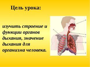 изучить строение и функции органов дыхания, значение дыхания для организма че