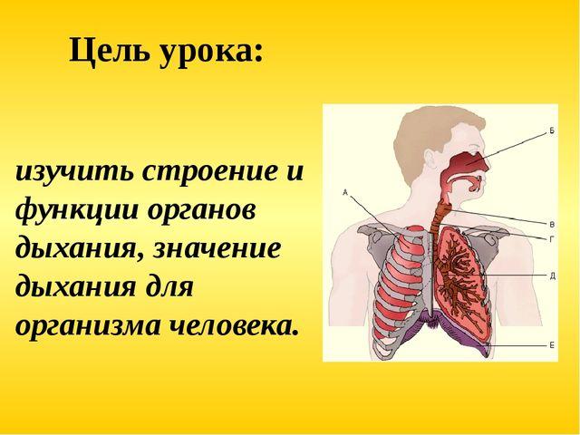 изучить строение и функции органов дыхания, значение дыхания для организма че...