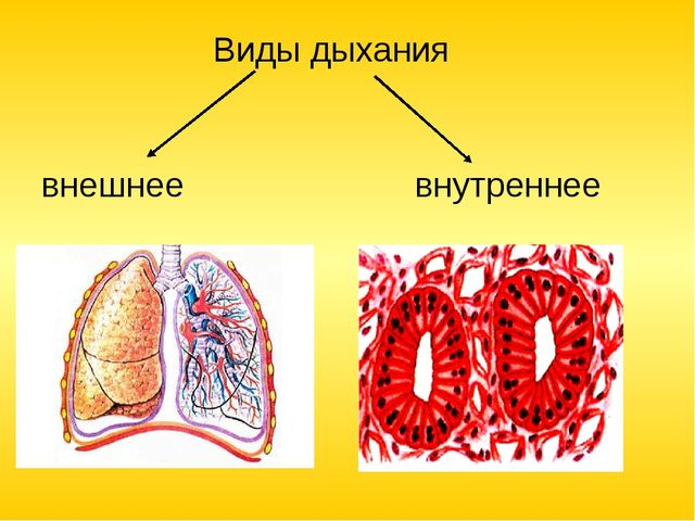 Виды дыхания внешнее внутреннее (клеточное)