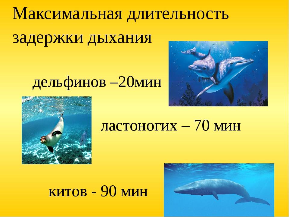 Максимальная длительность задержки дыхания дельфинов –20мин ластоногих – 70 м...
