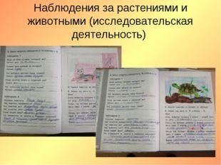Наблюдения за растениями и животными (исследовательская деятельность)