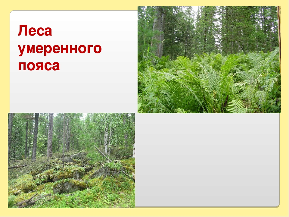 Леса умеренного пояса